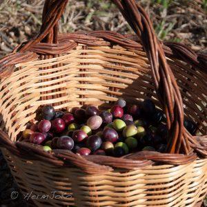 olives noires (3)